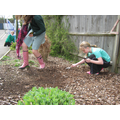 Grow Wild seed sowing