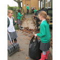 leaf collection year 5