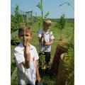 Picking parsnips year4