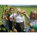 Longest root crop