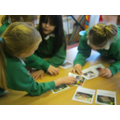 yr3 learn how to sow seeds
