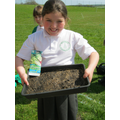 sowing lettuce seed
