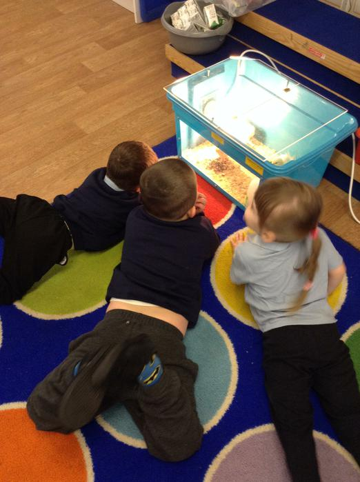 Looking at the newly hatched chicks.