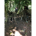 Busy building dens.