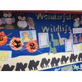 EYFS Display linked to topic