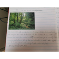 Jessica's wonderful descriptive writing!