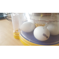 """1. The first egg has """"pipped"""" through Monday Night"""
