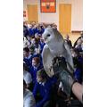 Sky - The Barn Owl