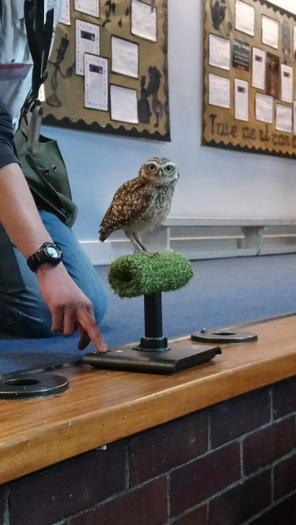 Tiny Tempah - The Burrowing Owl