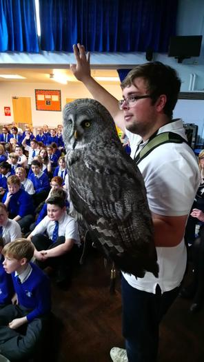 Dave The Great Grey Owl (& Daniel)