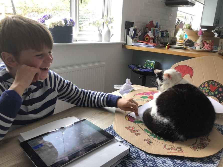 Hamish's cat wants to join in Home Learning