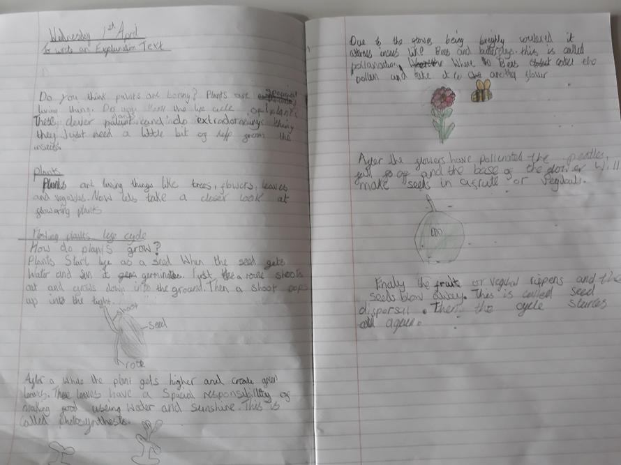 Ella's Plants Explanation Text