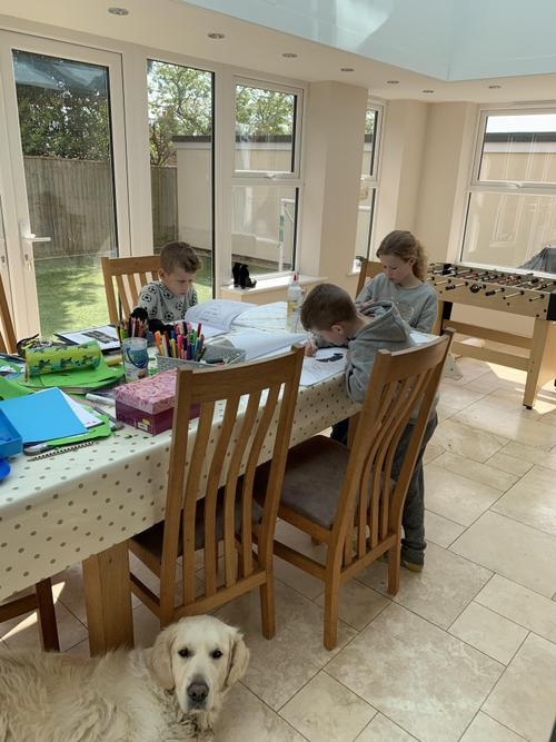 Home Learning - but is the dog concentrating?