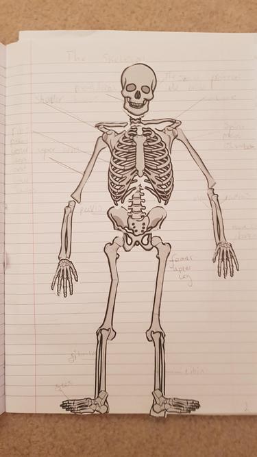 George's skeleton labelling