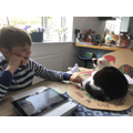 Hamish's cat wants to get in on his home learning