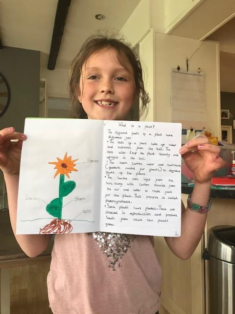 Evie's fantastic Plant Fact File 3