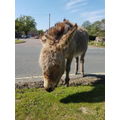 Miss Crawford spotted this cute donkey.