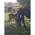 and this new born foal