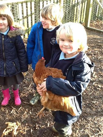 We love looking after the chickens.