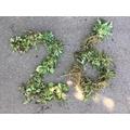 Mini MOSPS team pulled up 26 weeds