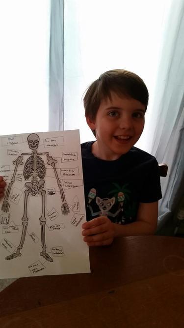 Skeleton Making