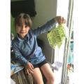 Frances's parachute experiment 1