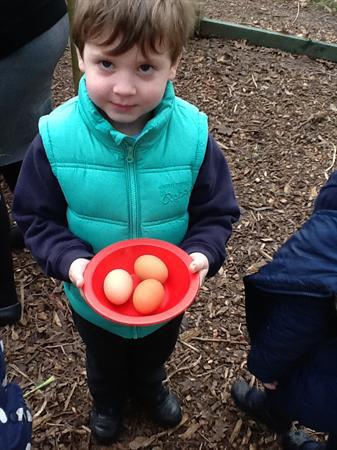 Look how many eggs the chickens have laid.