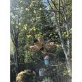 Hamish's brillian bird-feeders