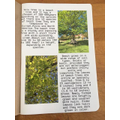 Thea's book about trees (2)