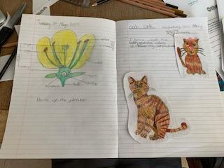Look at Annie's Science and Art. Fantastic!