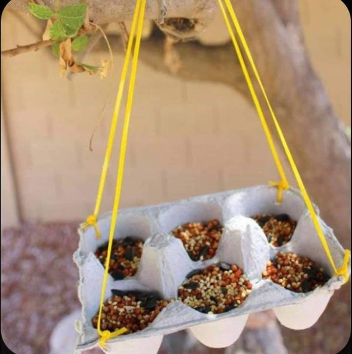 Big Ted has recycled an egg box to use as a bird feeder. What ideas do you have?