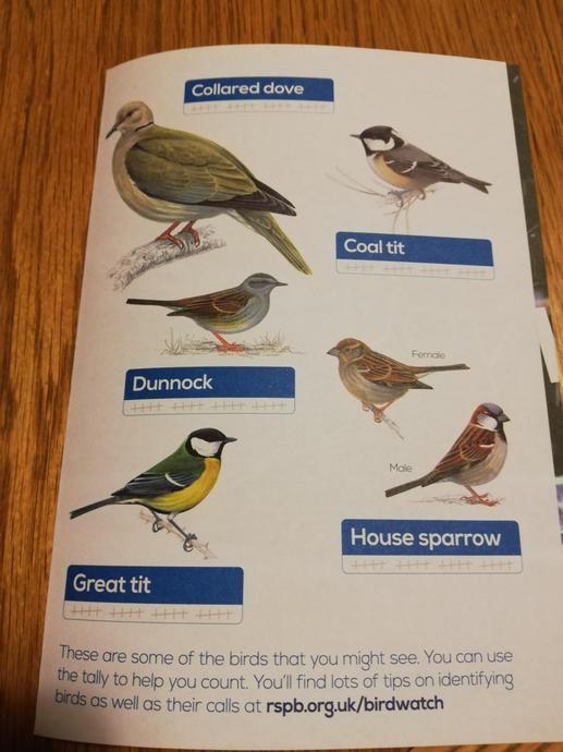 I wonder if you already recognise and can name some of the birds?