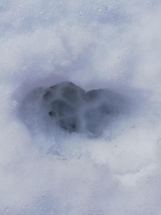 Medium sized footprints