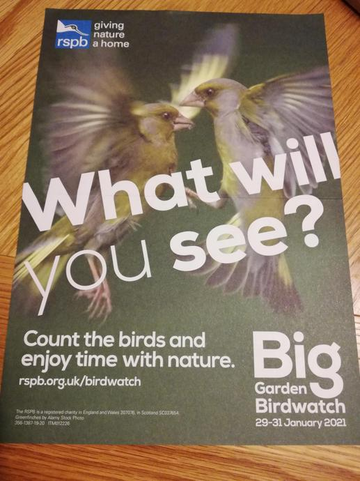 Join the RSPB garden/window bird watch online for free.