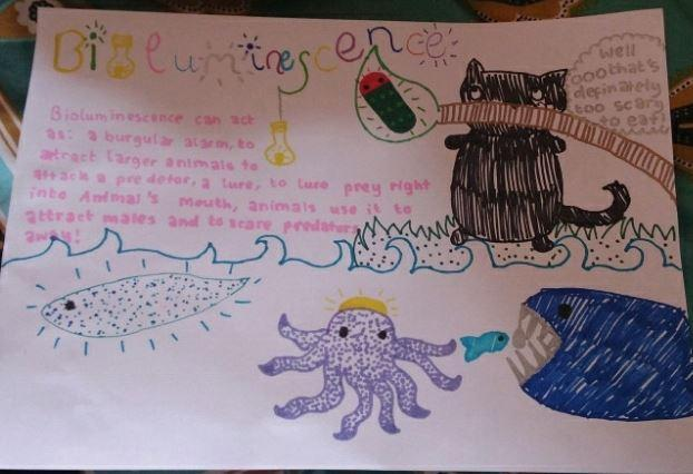 Y5-Freyja for a super poster about bioluminescence