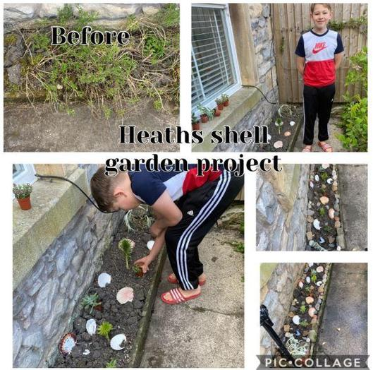 Y6 - for a great shell garden project