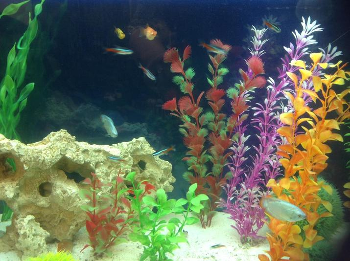Our School Tropical Fish