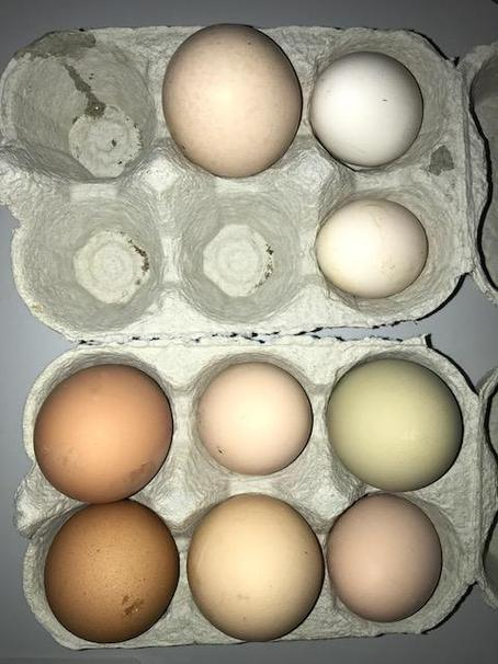 Look at the different eggs!