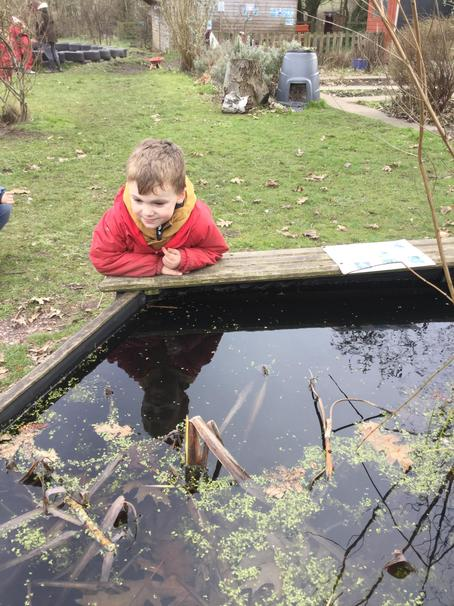 More pond dipping