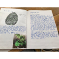 Amazing writing from Stanley :-)