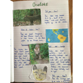 Millie researched and reported on ocelots
