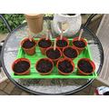 Mrs Bloom's flower seeds week 1