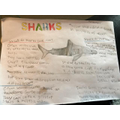 Harley wrote about sharks