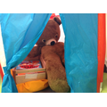 We captured the bear in our tent!!!