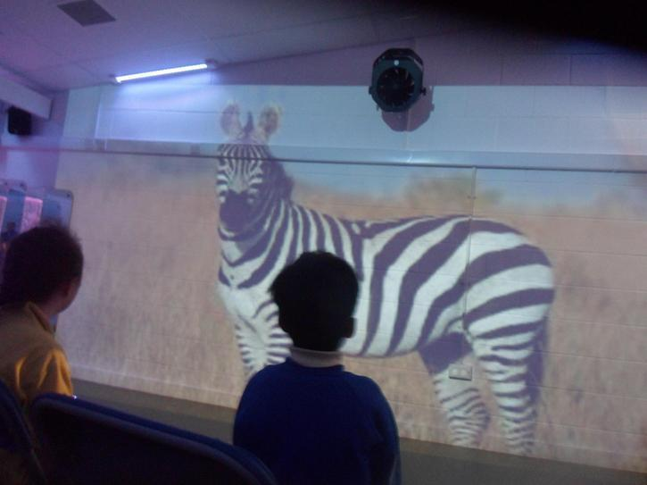 We even saw a huge, stripy zebra!