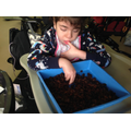 Emily exploring the raisins independently.