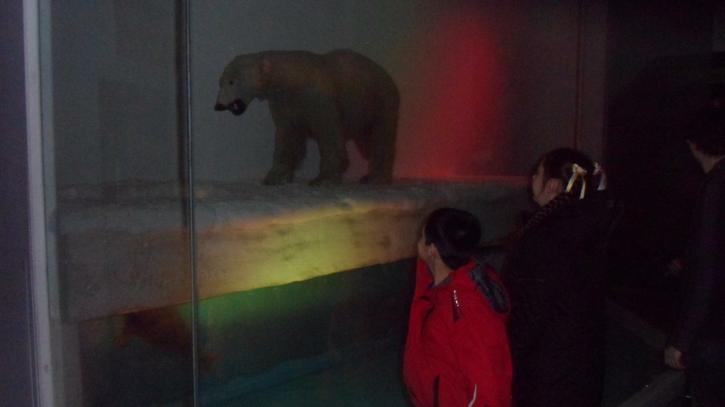 Hamza and Mollie found a Polar bear