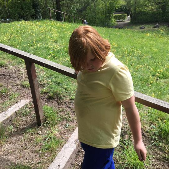 When we are in forest school, we are able to walk independently and explore new things.