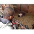 Kenson liked the pigs