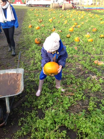 Pumpking Picking!